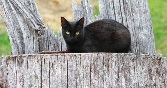 Nehľadajte čiernu mačku ale radšej počúvajte svoju intuíciu, či potrebujete energetické čistenie pozemku cez Akášický zdroj
